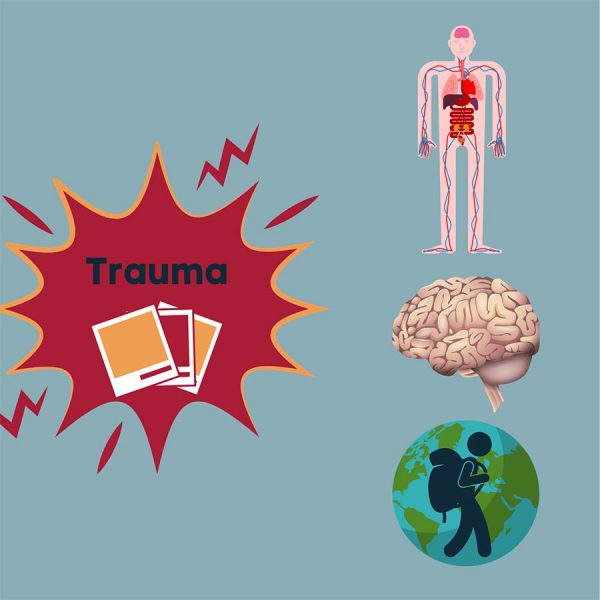 trauma kind training